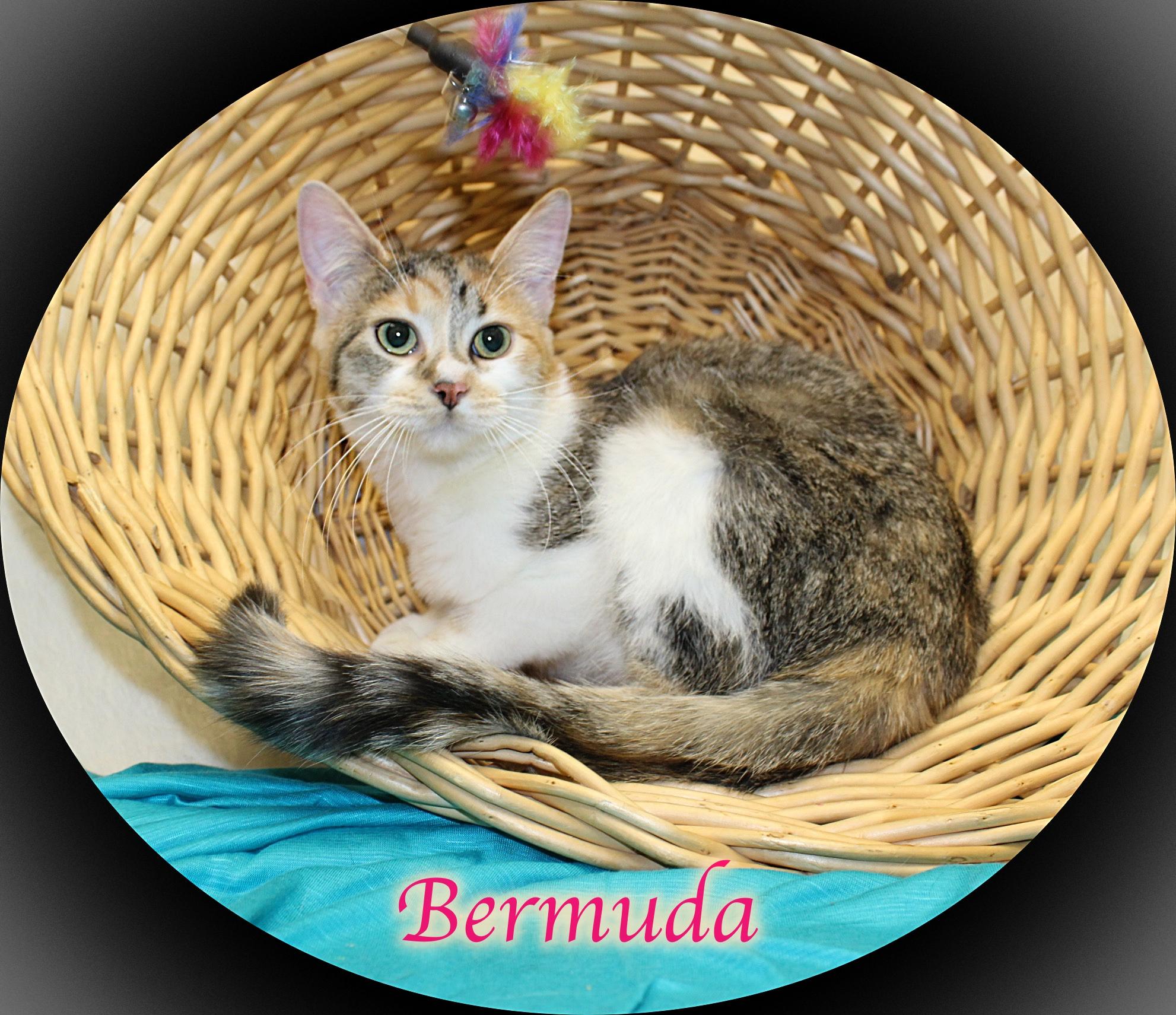 Kitty Bermuda Nude Photos 52